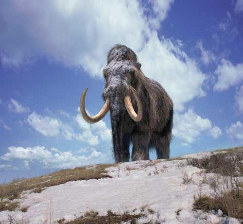 Sur la terre des monstres disparus - Des Mammouths et des Hommes [TVRIP | FRENCH] [FS] [US]